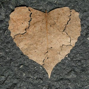 broken heart-shaped leaf